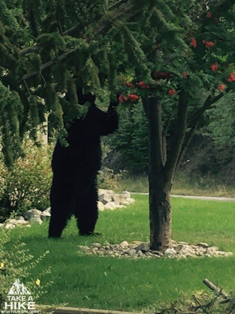 This is on my neighbours lawn, right beside us, very close!