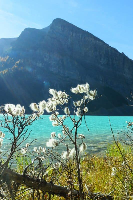 lake Louise with a mountain in the back