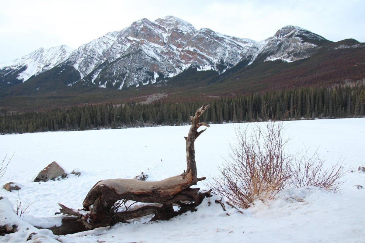 take a hike with your children,three mountain family hikes,families closer to nature, Pyramid lake,jasper national park