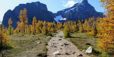 Lake Louise Fall Larch Hikes: 6 hikes guaranteed to meet all hiking abilities.