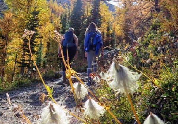 Saddleback trail, Lake Louise, Banff National Park